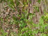 realtree-camo-pattern-realtree-xtra-green-01