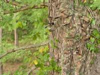 realtree-camo-pattern-realtree-xtra-green-04
