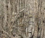 realtreemax5timber